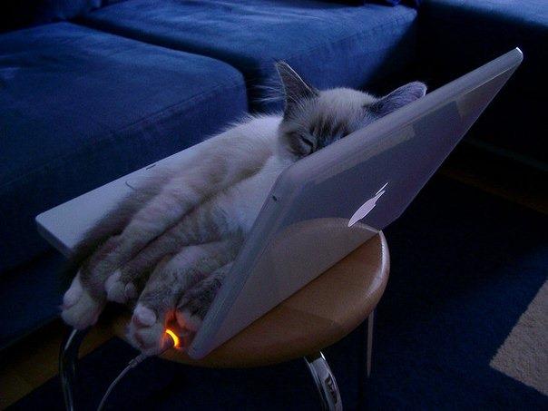 Кот на ноутбке